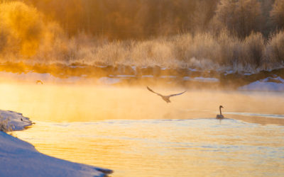 COVID-19 Fishing & Hunting FAQ UPDATE