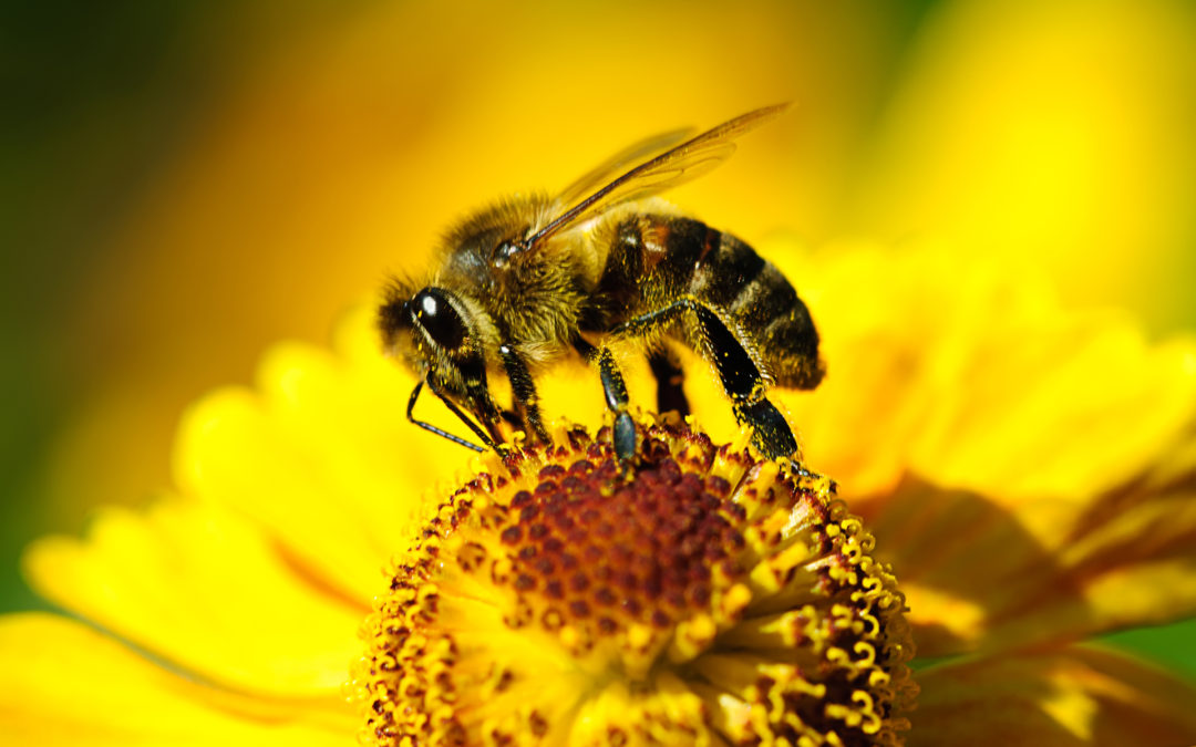Become wild bee friendly